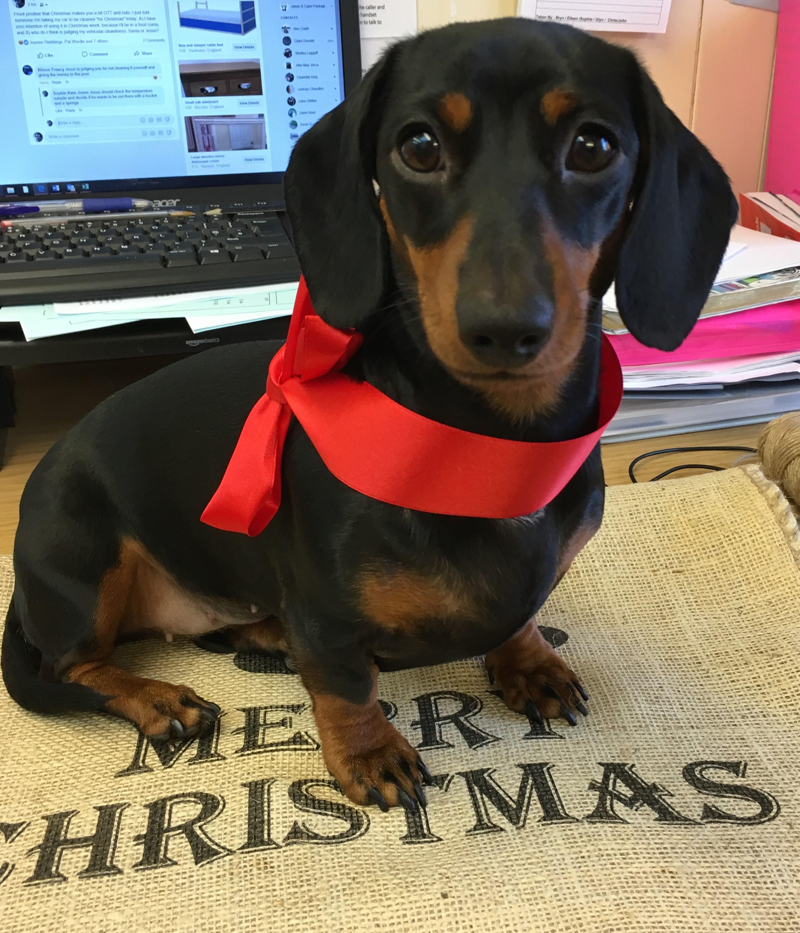 christmas sausage dog